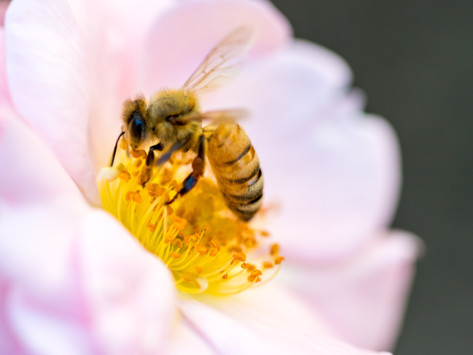 FROM THE ARCHIVES: Please Help Save The Bees