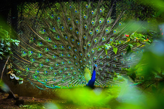 Image by Harshitha B J