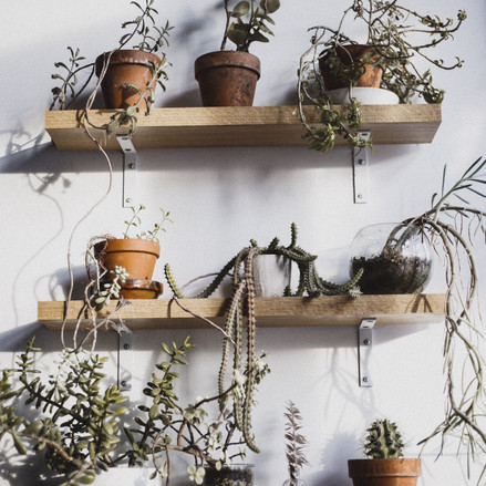 How to bring back a dying plant in 10 Steps