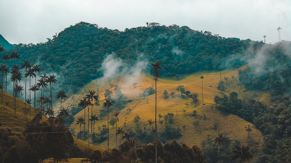 Cocora Valley - Is Colombia Safe?