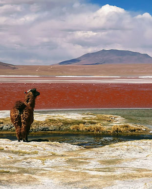 Blaycation Travel - Road Trip Adventures in Bolivia