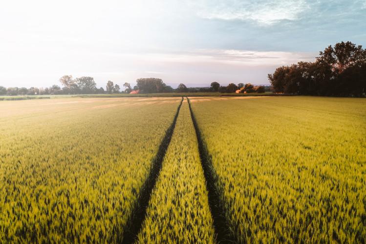 North Norfolk fields