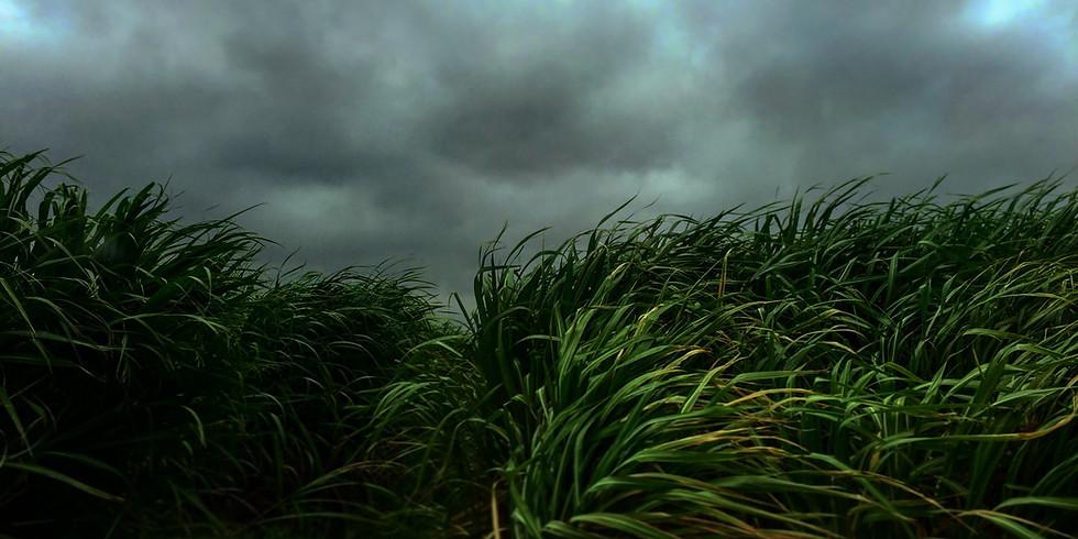 Peak Pose Flow - Sugarcane Pose