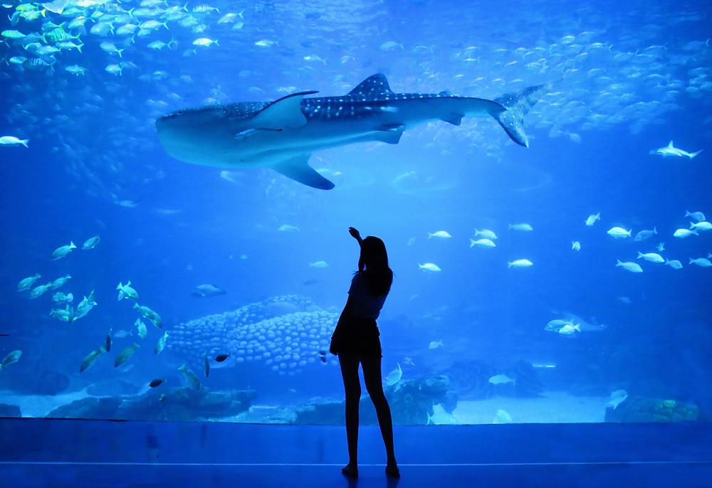Aquarium, Atlanta