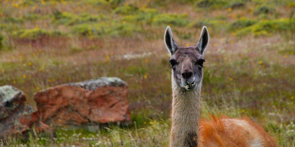 TALK|  Rutas Patagonicas Appenninicas