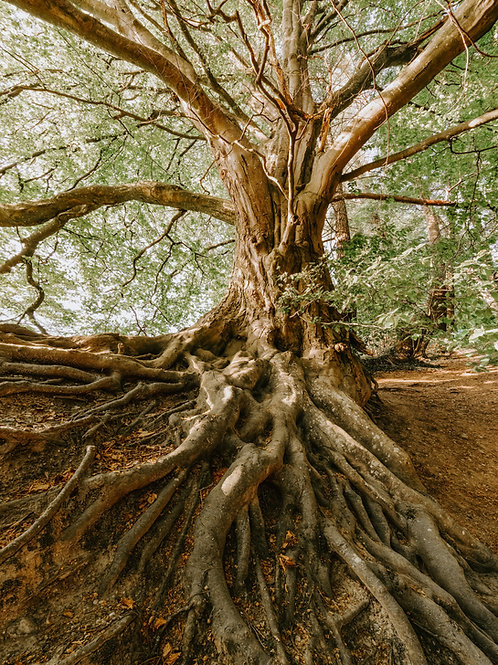 7 Day Root Chakra E Workbook