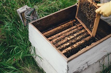 Bees Honey Honeybees Honeycomb