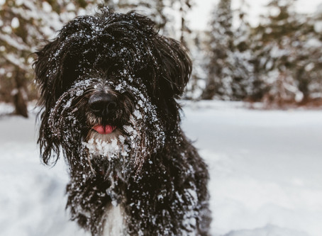 Your Pet and Winter Conditions