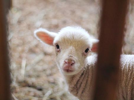 Jesus our Passover Lamb (April 6, 2020)