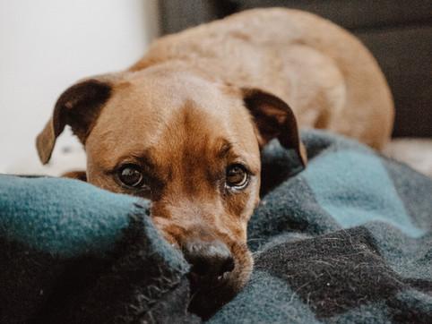 如何增強狗狗的安全感