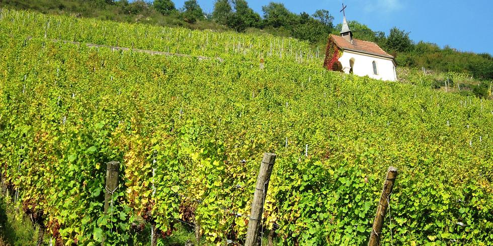 Wine Tasting - Domaine du Grand Veneur, Chateauneuf-du-Pape