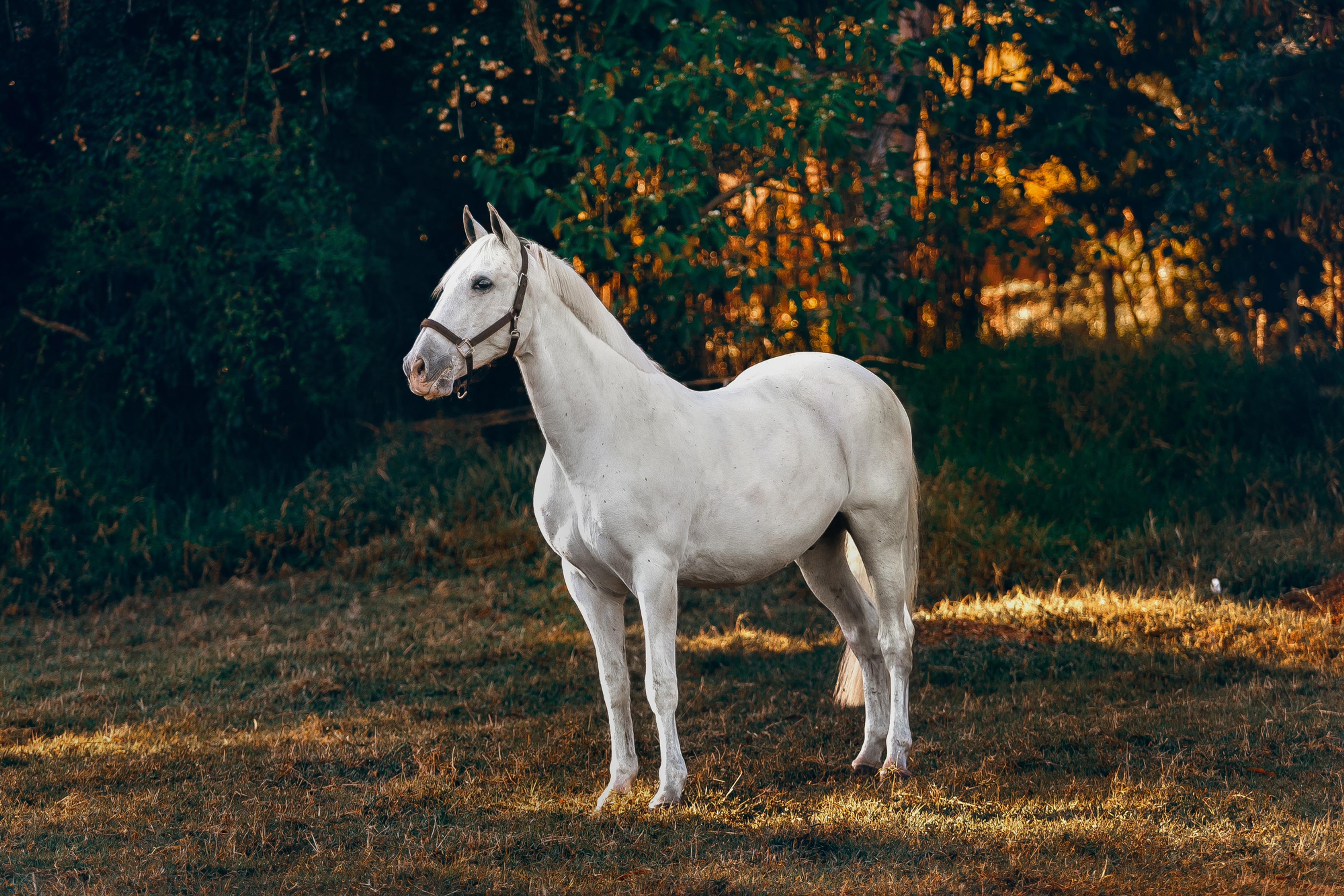 Consultation ostéopathie - Equin