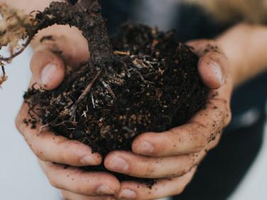 Soils & Fertilizers