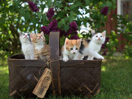 Manfaat Sterilisasi bagi Kucing, Anda Perlu Tahu!