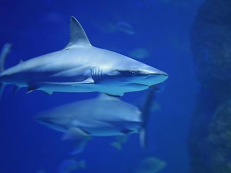 Avoiding Loan Sharks