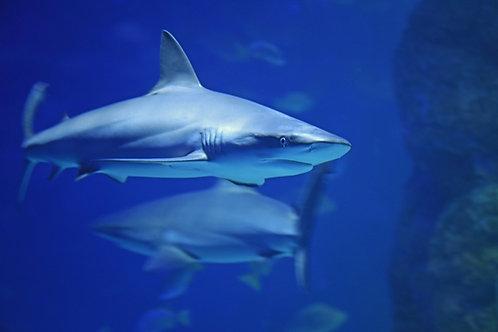 Let's Talk Sharks!