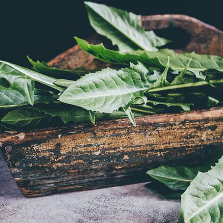 Dandelion Greens for Detoxification and NAFLD