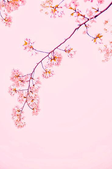 Image by Mi Min