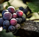 Image of grapes by Kevin Maillefer