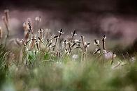 grasses in wildflower meadow