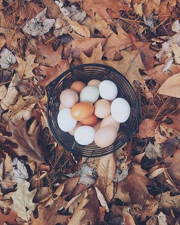 Image de Autumn Mott Rodeheaver