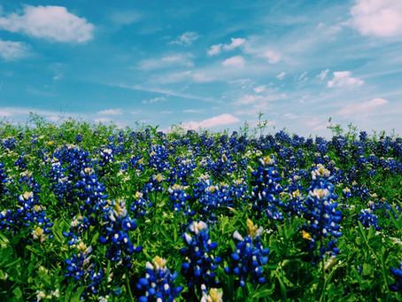 Texas Rockhounding