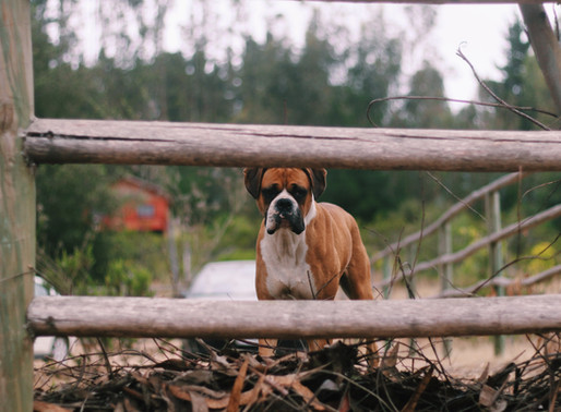 """Bouncing Back The """"Boxer Way"""""""