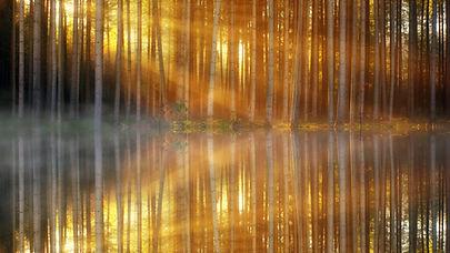 See spiegelt Wald und Sonne wider
