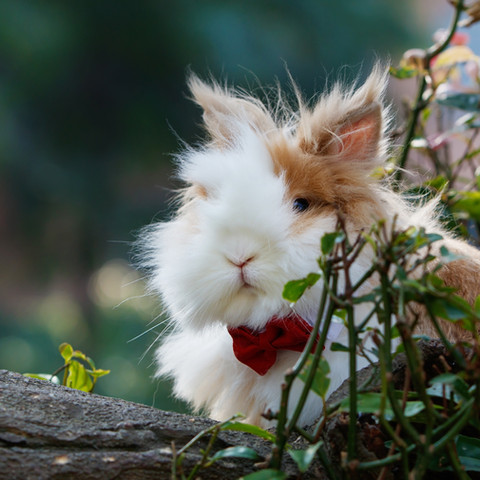 Love & a Bunny is all you need!