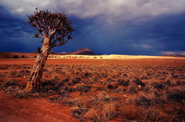Africa Desert