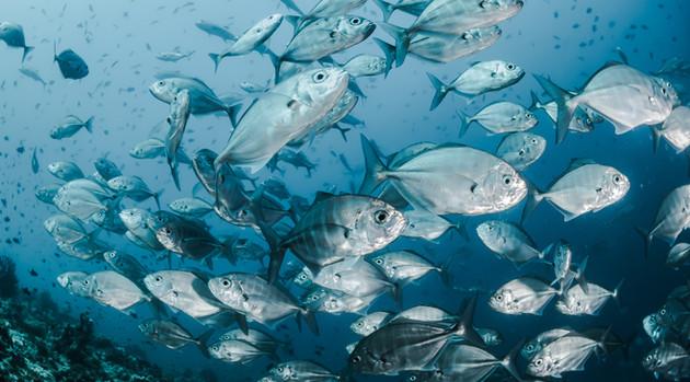 Biscayne Bay Hypoxia and Fish Kill