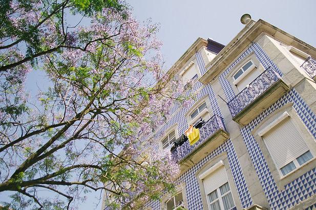 Lisbon tile historical building jacaranda tree