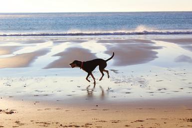 כלב נהנה בים