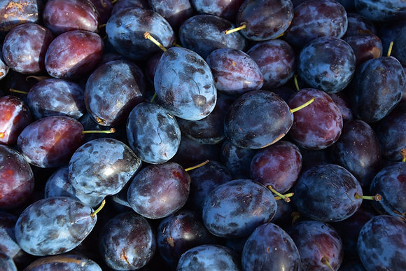 Plum Early Rivers