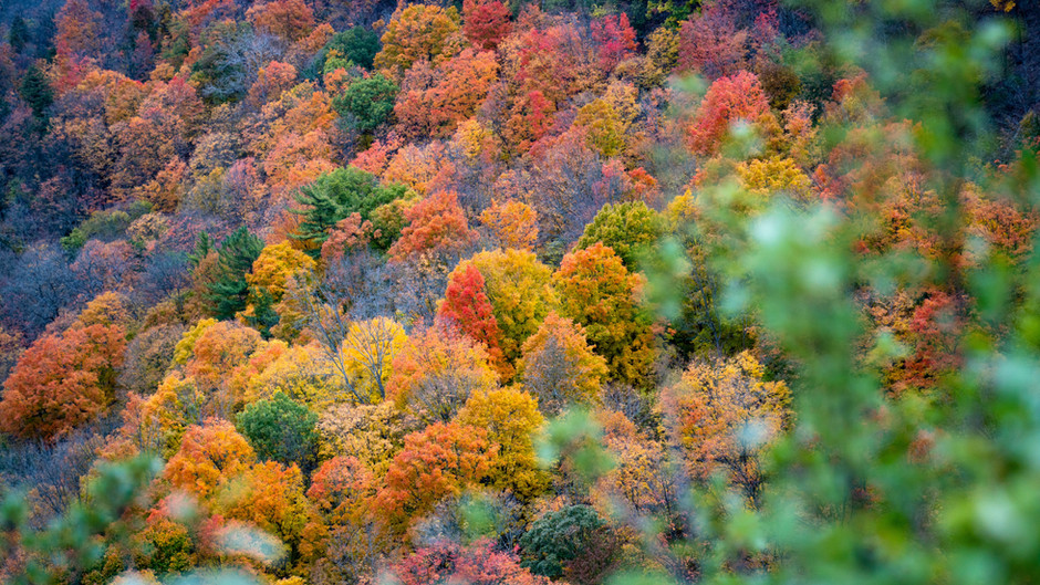 New research shows forests equivalent to the size of France have regrown in the last 20 years