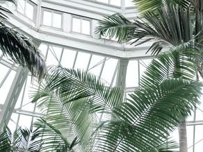 Conservatory & Orangery Interior Design Ideas