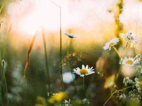 Eight great idioms and expressions about spring