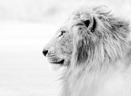 Leo Season ♌