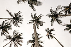 Coconuts for Luau