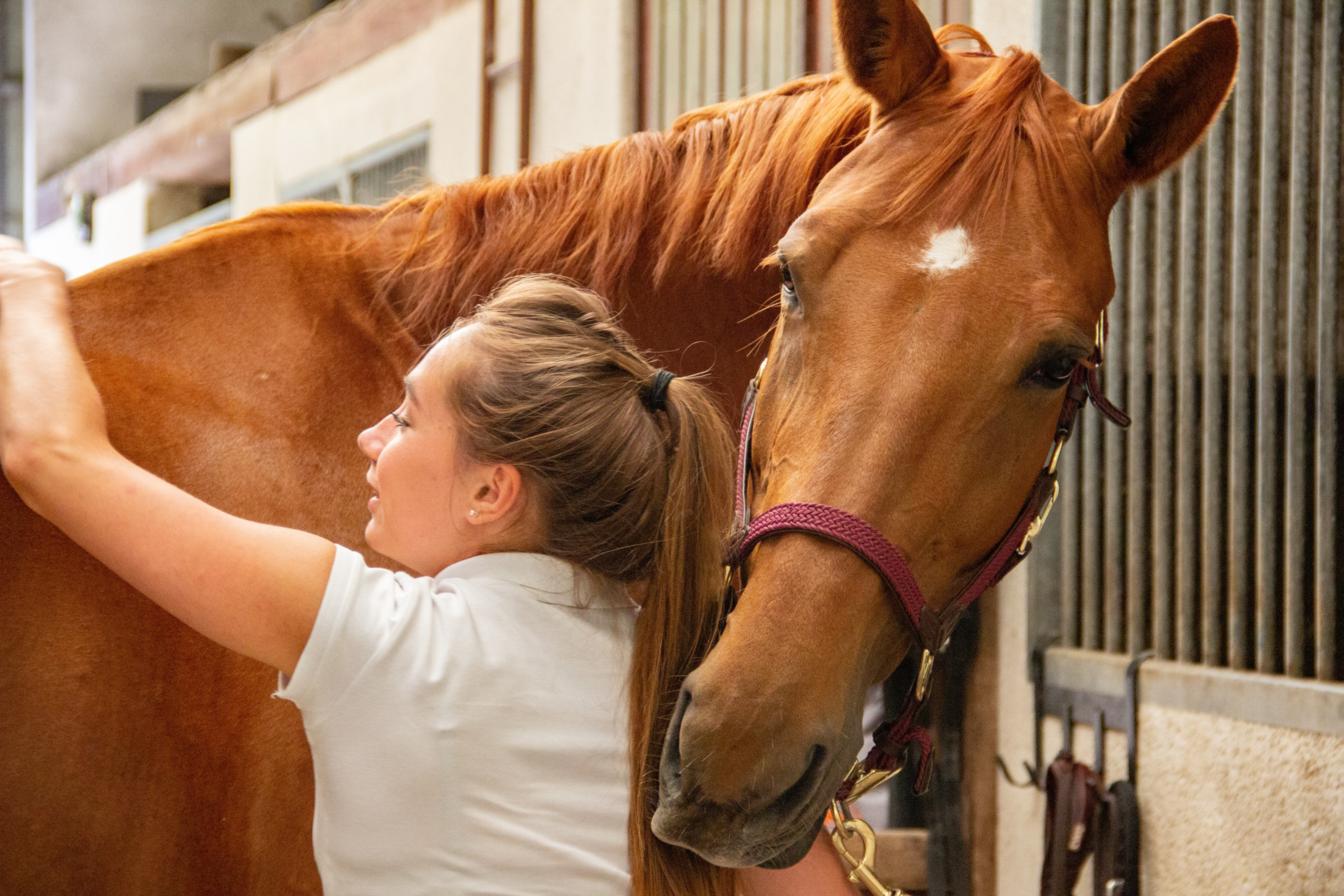 Equine Assisted Therapy (EAT)