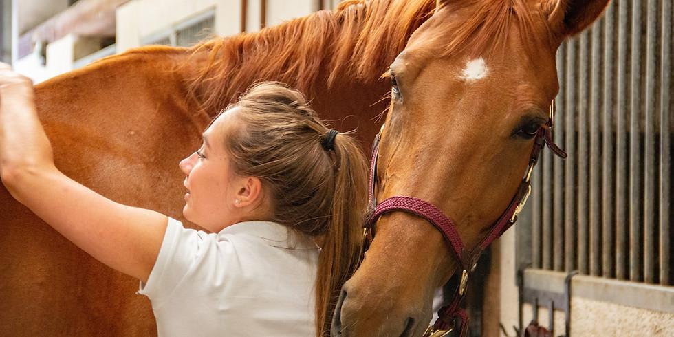 Kurs Bodenarbeit von pferdealltag.ch