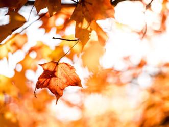 Celebrating Fall at Bear Creek Church