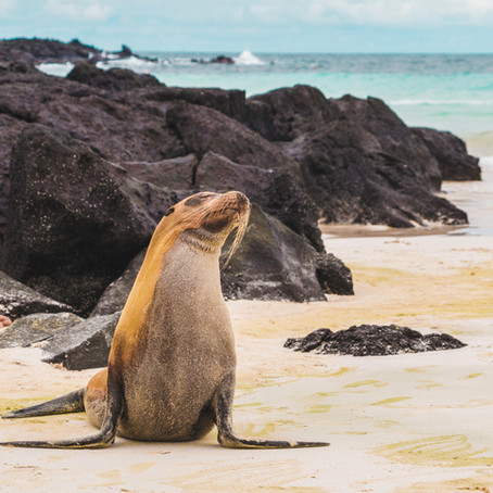 Destination Review: Galapagos Archipelago with Lindblad Expeditions - March 2017