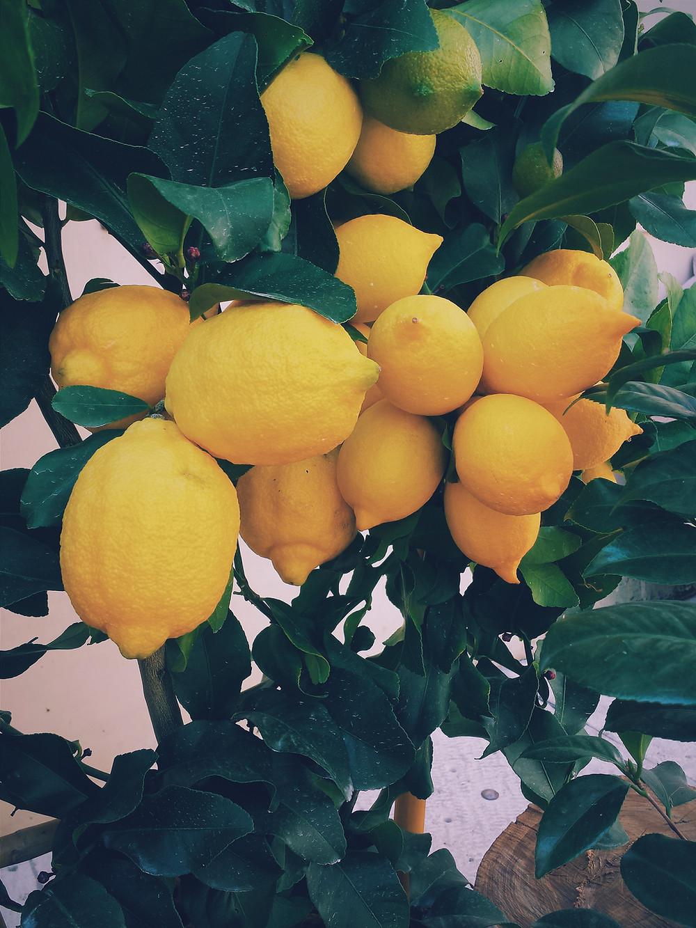 citral terpenes found in lemons
