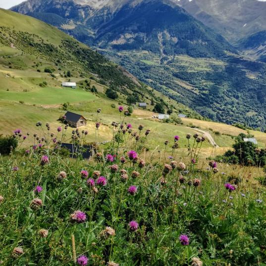 Cueillette et cuisine des plantes et fleurs sauvages