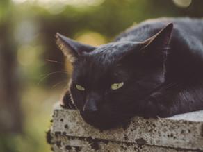 Having an Indoor/Outdoor Cat