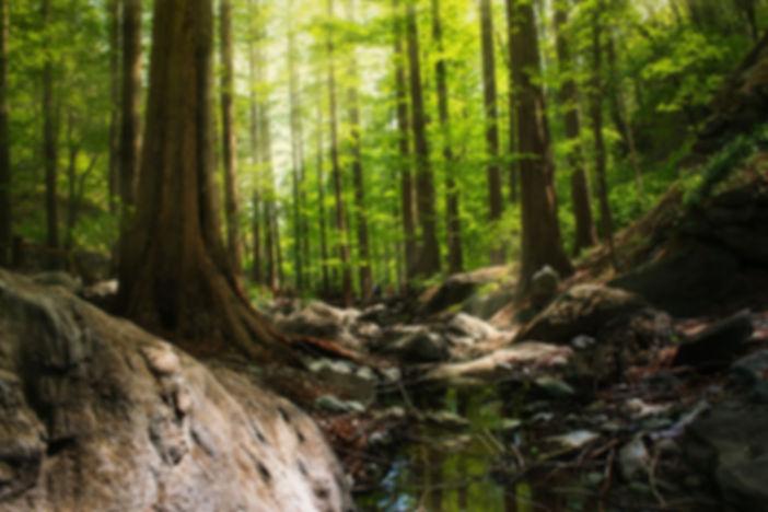 イヤシロチの森林浴