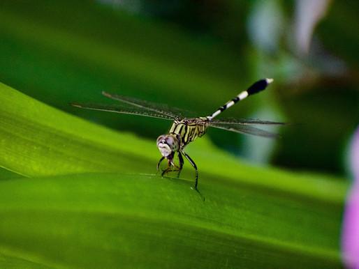 Solutions naturelles contre les moustiques