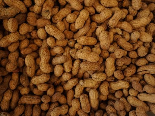 Innovation : Quand un jeune sénégalais utilise les coques d'arachide pour produire de l'énergie