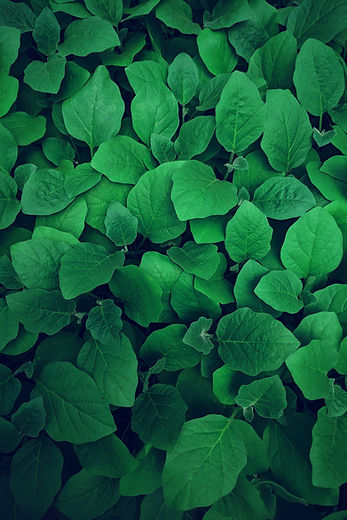 Image of bright green leaves